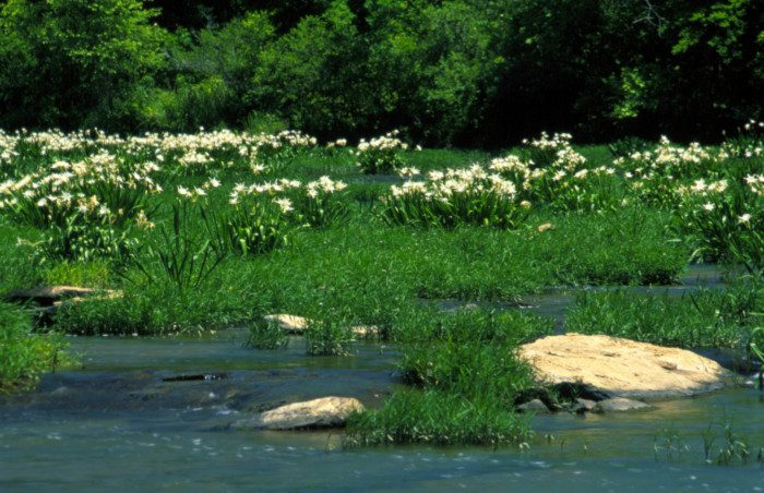 14. Alabama: Cahaba River National Wildlife Refuge