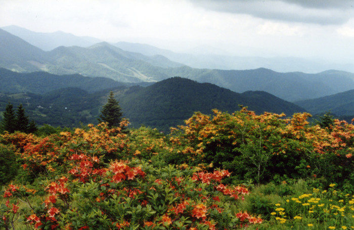 Tennessee: Roan Mountain State Park