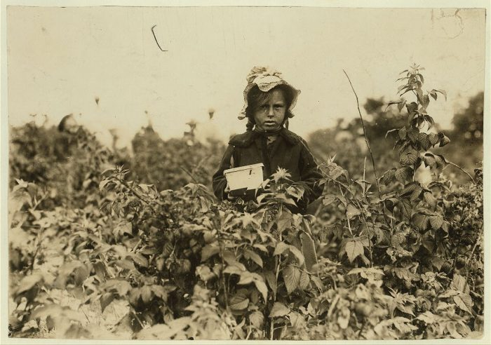 5. A girl working in the fields near Baltimore in 1909.