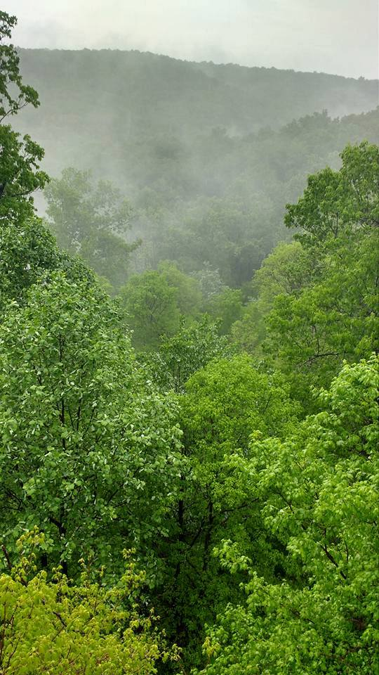 Sometimes a fog mists up deep in the forest, contrasting against the vibrant green of the leaves.
