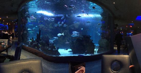 Aquarium Trip  Advisor