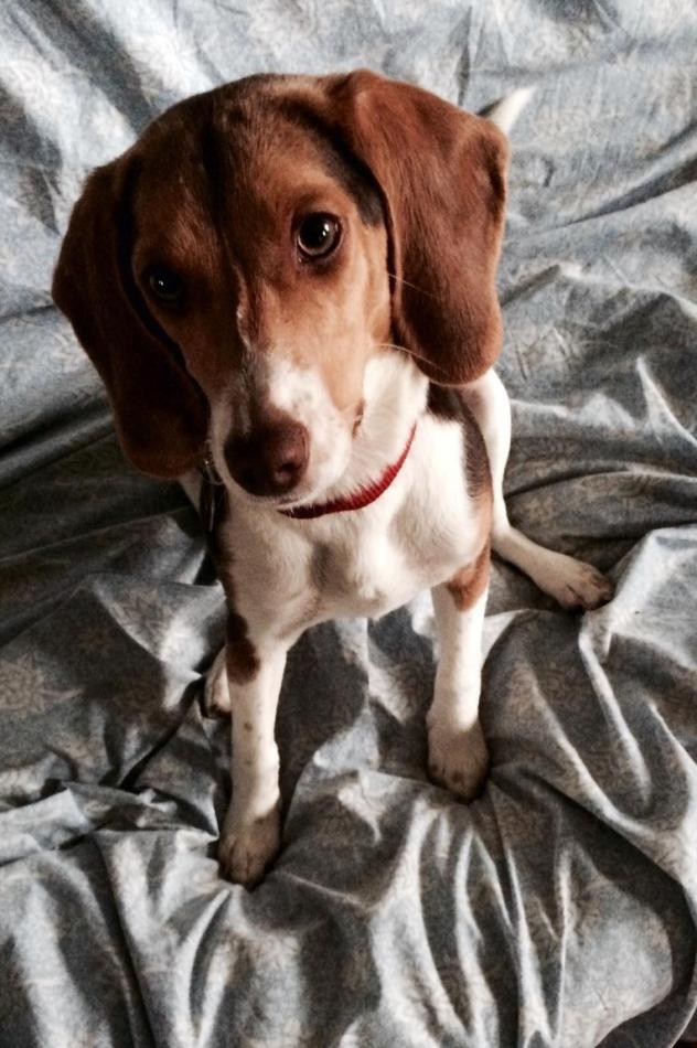 Billy, Male, 6 Months, Manalapan
