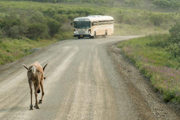 3. Tour Bus Driver