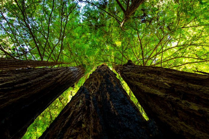 3. Big Basin Redwoods feels like a magical forest with its towering trees, colorful flora and fungi, and spectacular waterfalls.