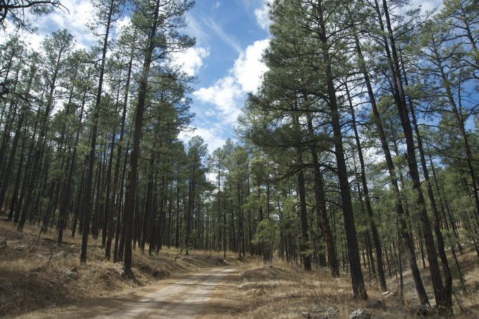 2. Trail of the Mountain Spirits Scenic Byway
