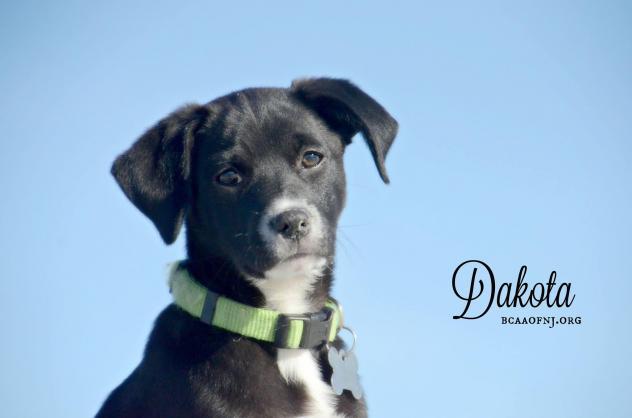 Dakota, Male, 14 Weeks, Willingboro