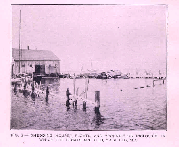 9. An image of Crisfield in 1920, where crabbing was, and still is, an important part of life.