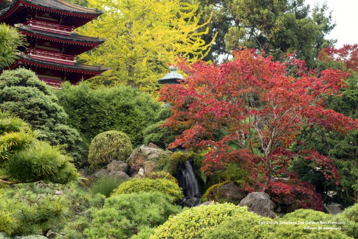 13 fun facts about san francisco for Japanese garden colors