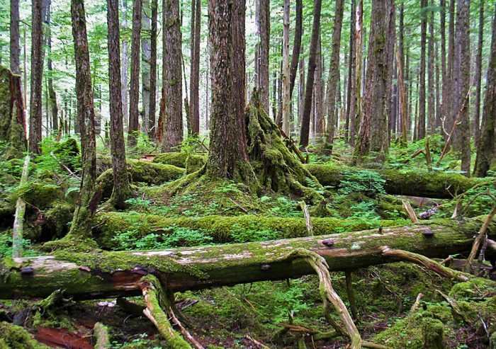 15. Tongass National Forest - Southeast