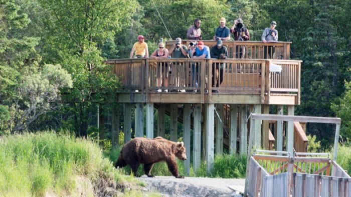 13. Bear Viewing Guide