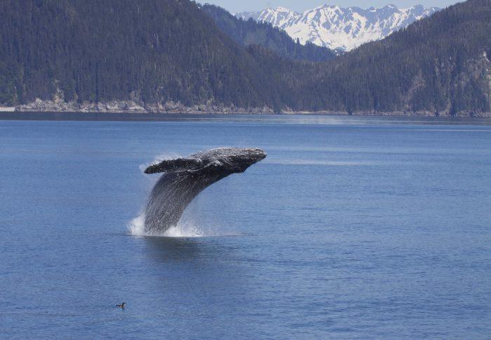 9. Kenai Fjords National Park