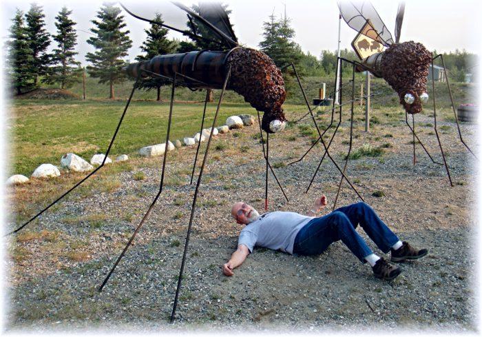 7. Wildlife attacks are vicious in Alaska.