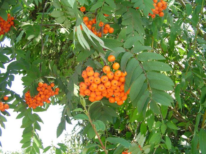 14. Fresh Picked Alaska Berries