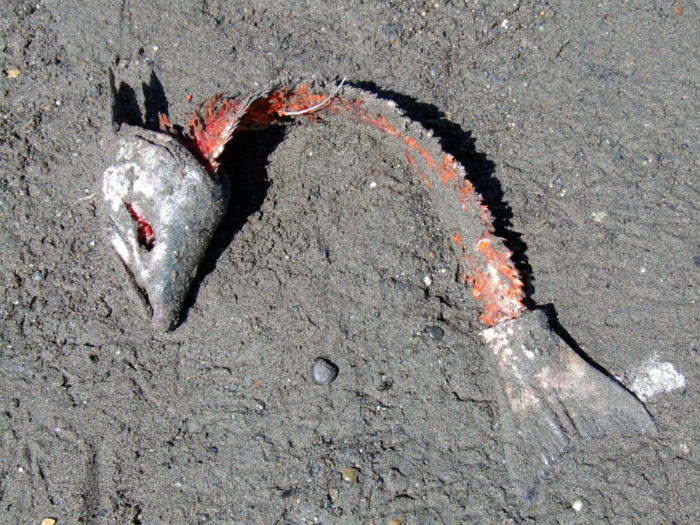 17. Leaving fish carcasses on the shore.