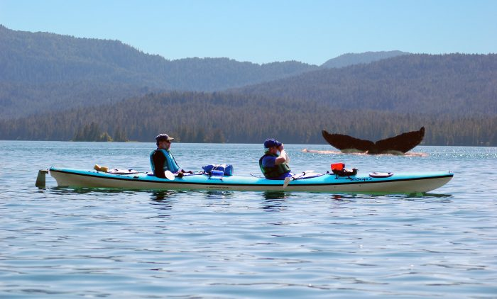 11. Go whale watching via kayak.