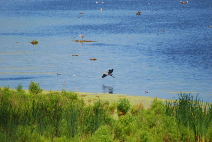 3. Montezuma National Wildlife Refuge, Seneca Falls