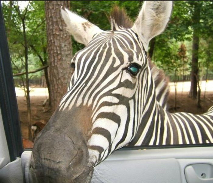 Harmony Park Safari 10