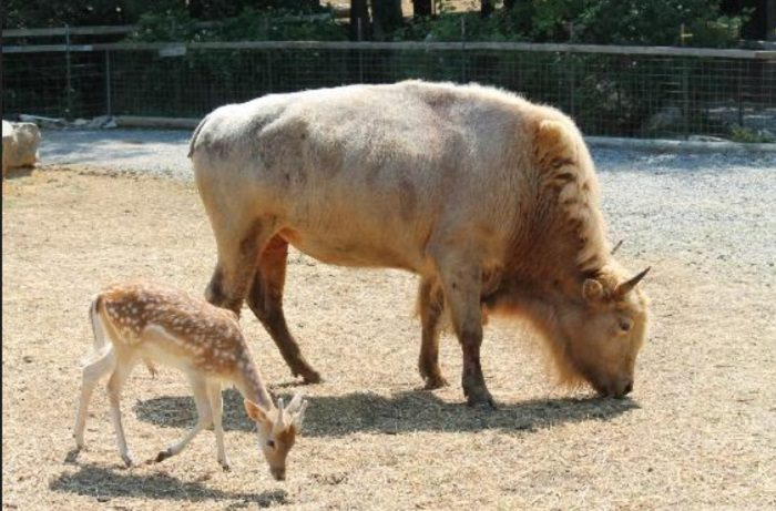 Harmony Park Safari 11