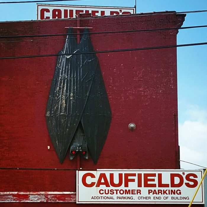8. Home of the world's two largest bats