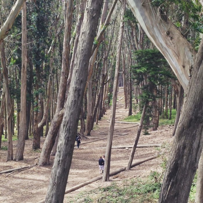 5. Lovers' Lane in the Presidio