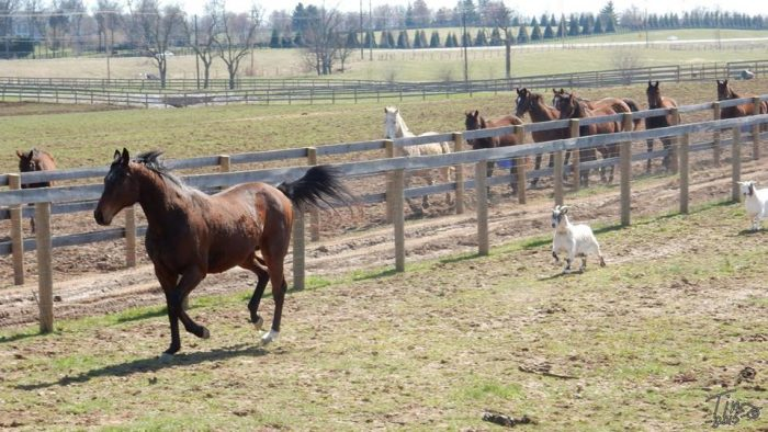 6. Instead of riding out to the Kentucky Horse Park…