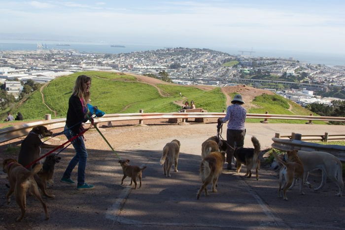 5. Forget kids. Dogs outnumber children here. And their owners don't always pick up after them…