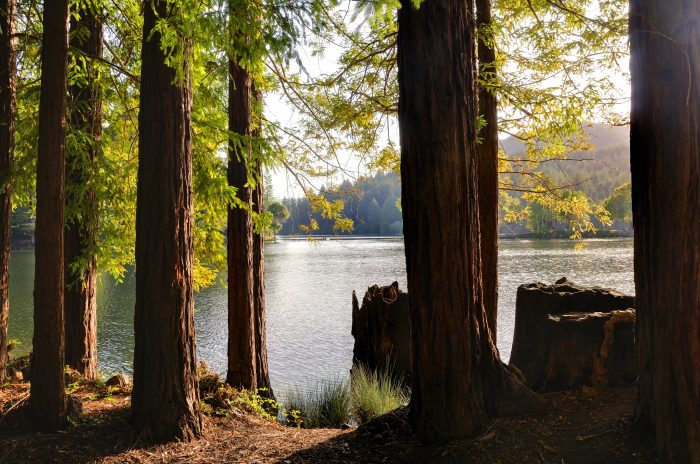 3. Loch Lomond Reservoir: Nestled in a redwood canyon in the Santa Cruz Mountains, and ideal for fishing (but no swimming allowed)!