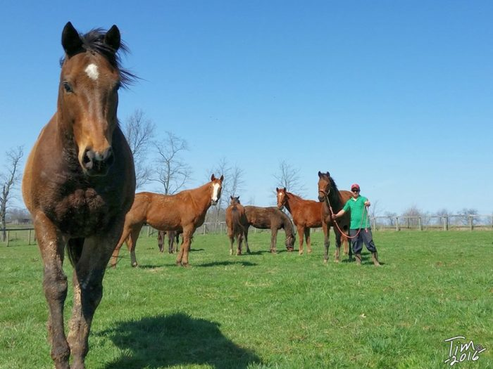 9. Visit Old Friends Farm for Retired Thoroughbreds.