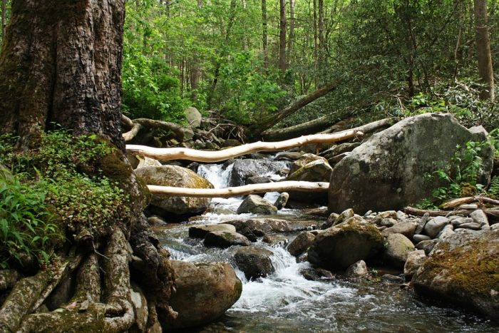 15. And we're going to leave you here, in the woods. By this stream.