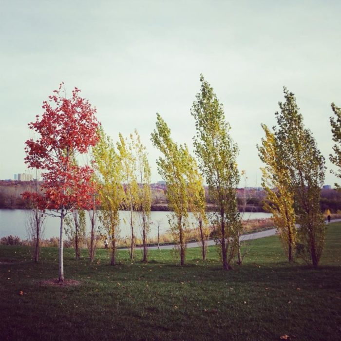 20. Ridgefield Park