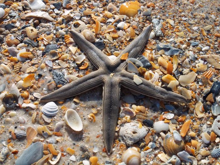 St George_008_Sea Star_0