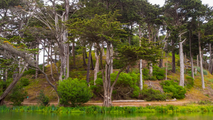 11. Strawberry Hill in Golden Gate Park