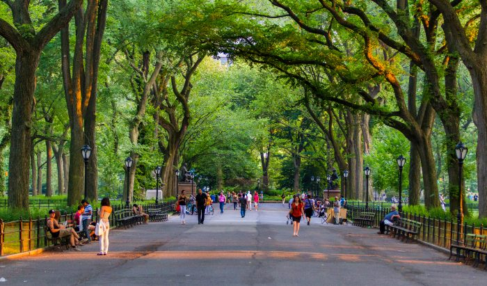 9. Out of all 843 acres, there is only one straight line that runs inside Central Park.