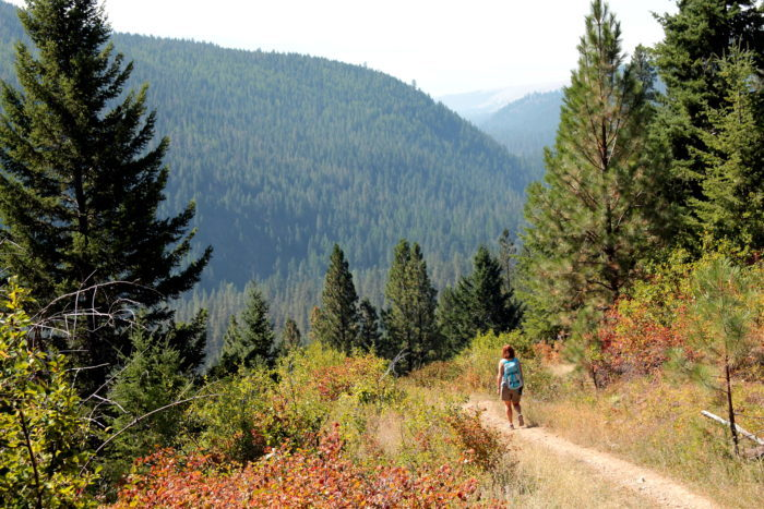Montana: Woods Gulch