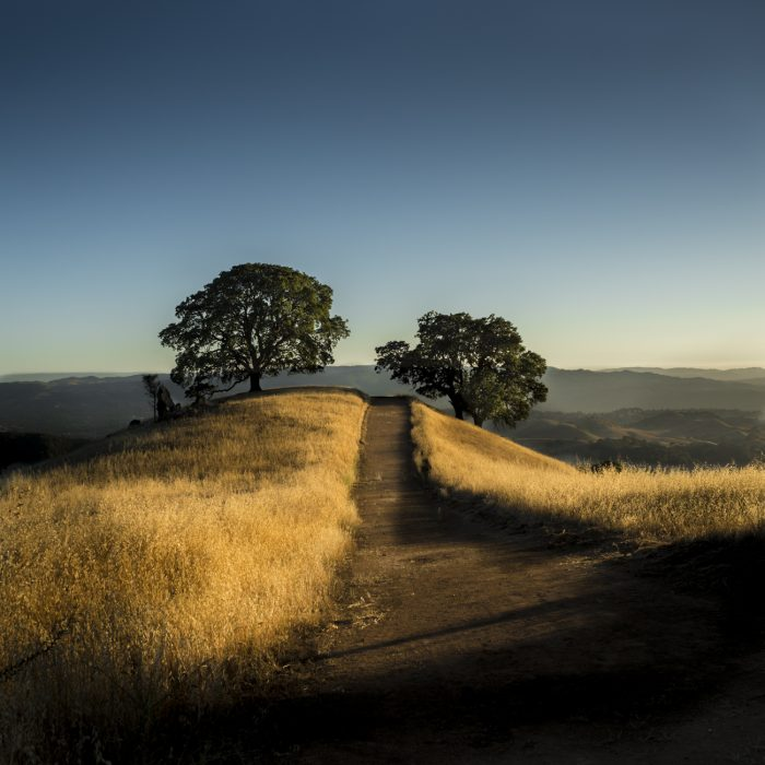6. Mount Diablo offers excellent hiking trails and  great views from the East Bay.