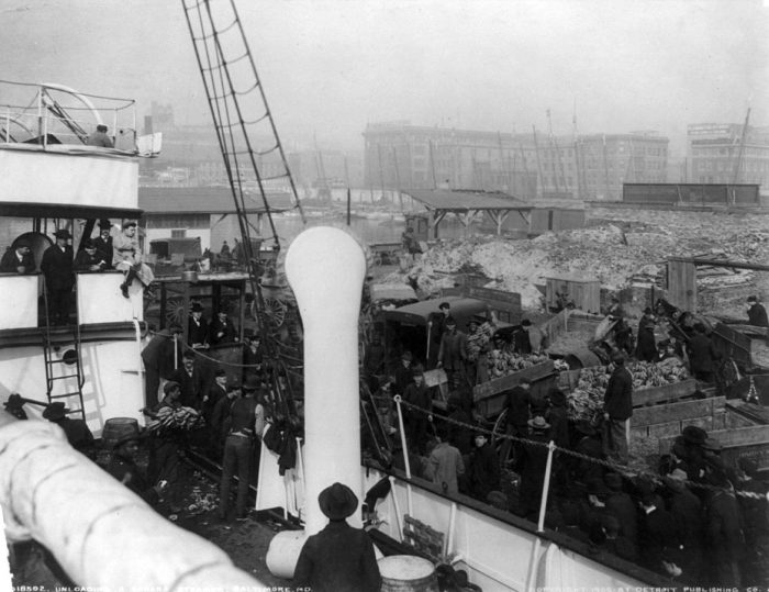 14. This image photographed in 1905 shows workers unloading bananas from a steamship in Baltimore.