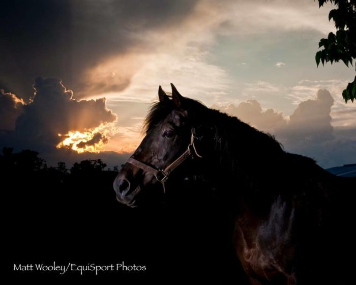 Visit Old Friends Farm for Retired Thoroughbreds.