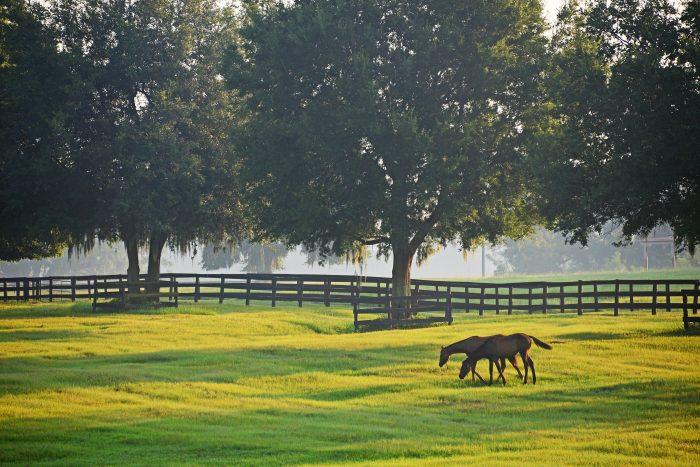 7. Visit a Kentucky horse farm.