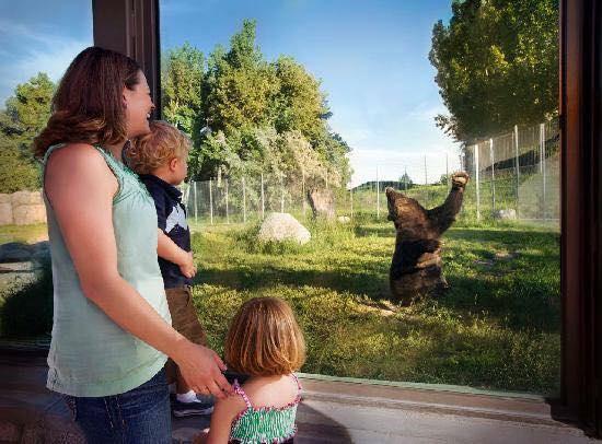 6. Head to Zoo Montana in Billings.
