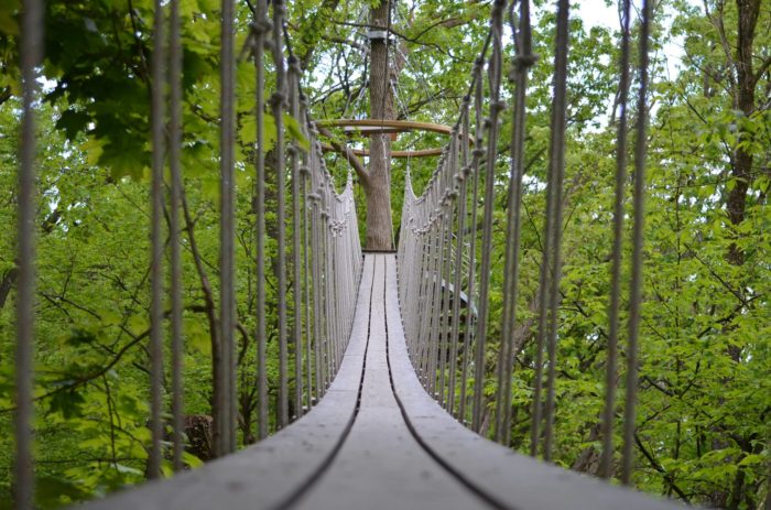There are a total of 5 sky bridges for you to walk through. & This Wisconsin Treetop Canopy Walk is Thrilling