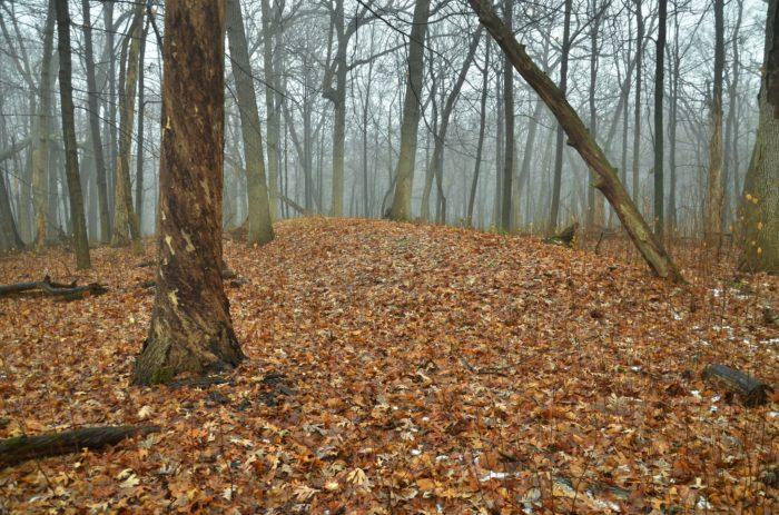 2. Effigy Mounds