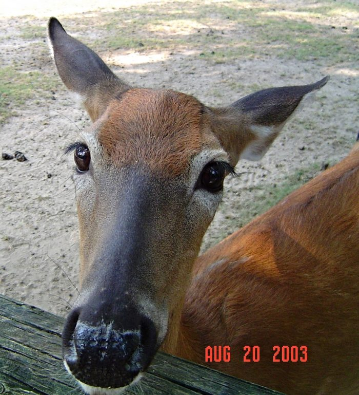 3. Visit the Deer Park--yes, a park full of deer that you can pet.