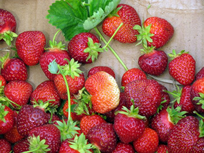 8. Pick some fresh strawberries.