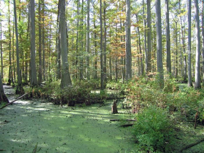 16. Explore the swamps of Southern Illinois.