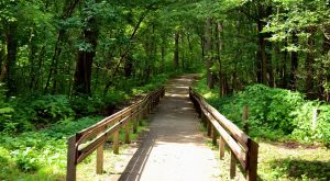These 12 Trails In Illinois Will Lead You To Unforgettable Places
