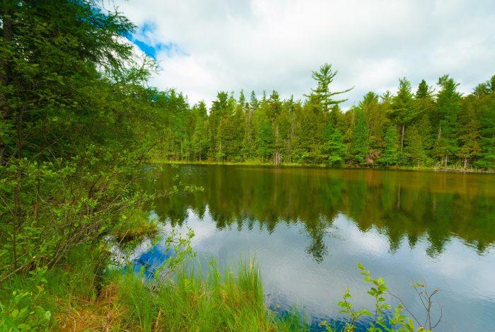6. Chequamegon-Nicolet National Forest (Rhinelander)