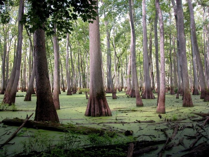 4. Cache River Natural Area