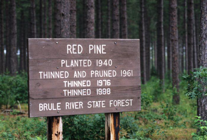 5. Brule River State Forest (Brule)