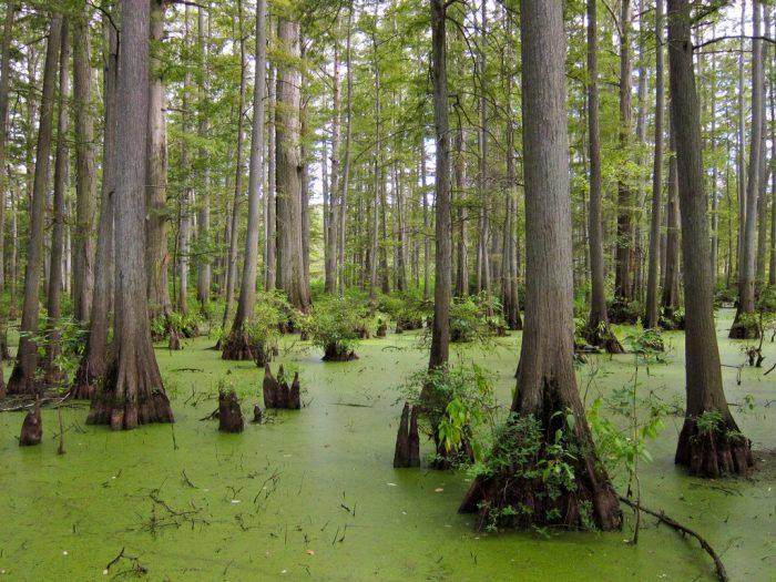 1. Cache River Natural Area (Belknap)