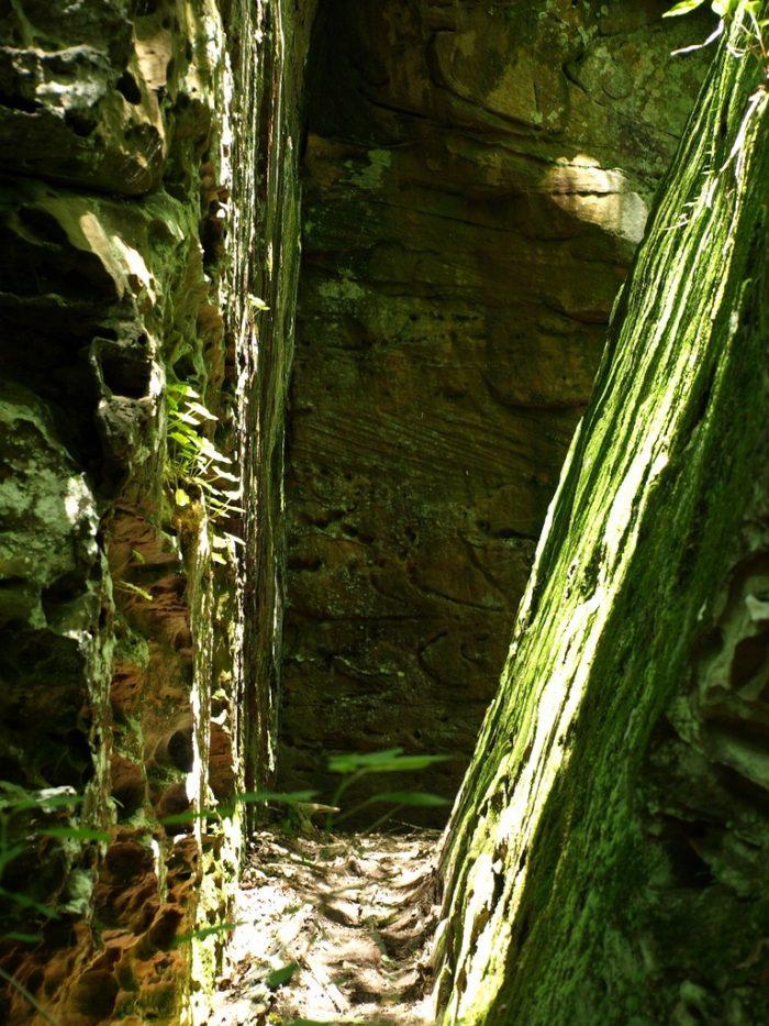 9. Ferne Clyffe State Park (Goreville)